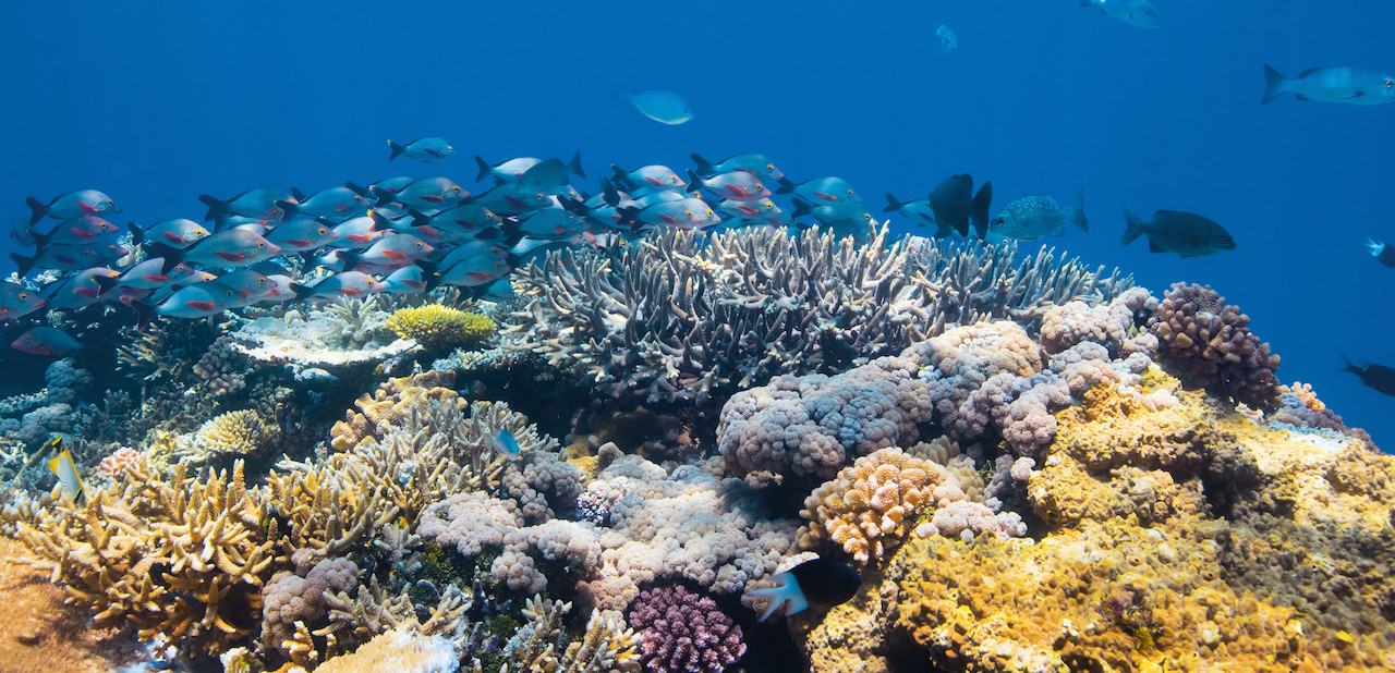 Great Barrier Reef, picture by © Darren Jew / Tourism and Events Queensland